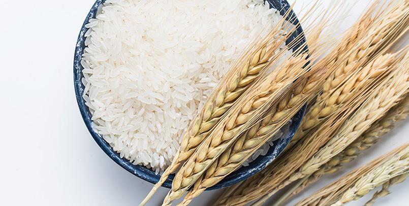 clases-arroz-olmata-caralin-group